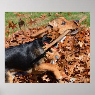 Poster Beagle jouant avec le bâton dans le feuille
