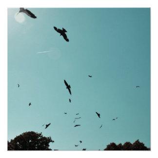 Poster Beaucoup d'oiseaux et un contrail
