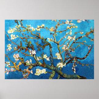Poster Beaux-arts se développants d'arbre d'amande de Van
