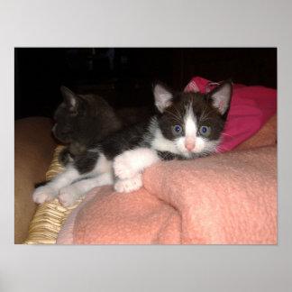 Poster bébés cat