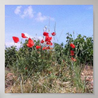Poster Belle affiche des pavots et des vignes rouges