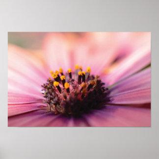 Poster Belle photo en gros plan de fleur