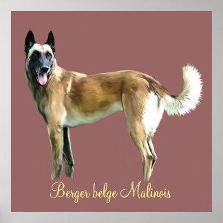 poster berger belge malinois