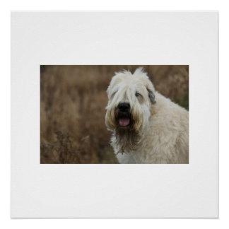Poster blond comme les blés-Terrier 2