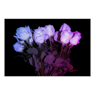 Poster Bouquet rose et pourpre de roses sur l'arrière -