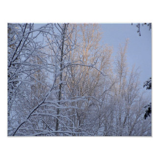 Poster Branches d'hiver