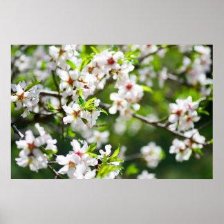 Poster Branches fleurissantes de l'arbre fruitier