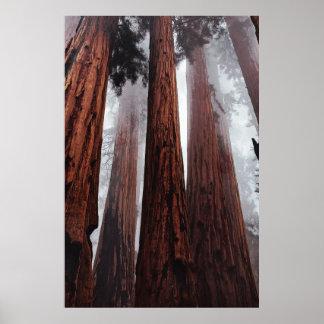 Poster Brouillard de matin dans la forêt de séquoia