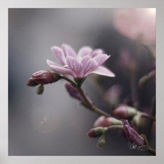 Poster carré , Fleurs / Flowers