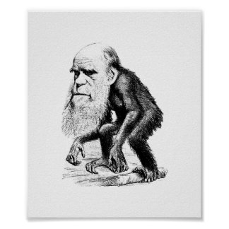 Poster Charles Darwin comme singe