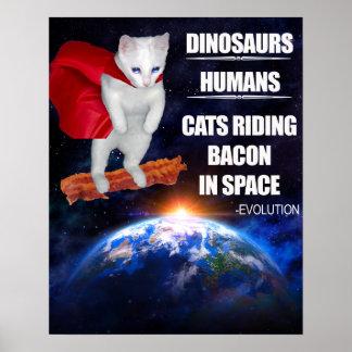Poster Chat drôle : Évolution
