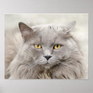 Poster Chat gris avec l'affiche de yeux verts