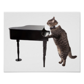 Poster Chat jouant le piano