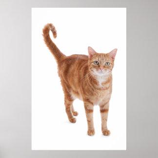 Poster Chat tigré orange
