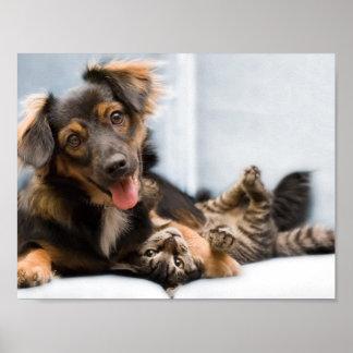 Poster Chats et chiens - chien drôle - chats drôles