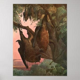 Poster Chauves-souris de Fox de vol par Austen, animaux