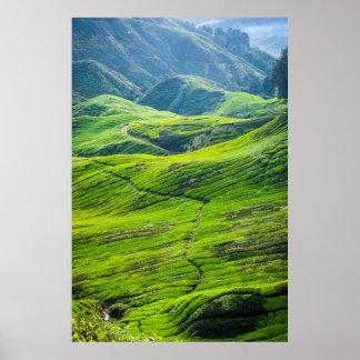 Poster Chemin à travers des plantations de thé