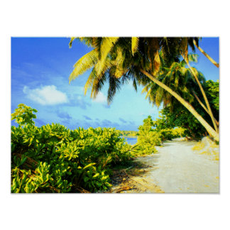 Poster Chemin de marche tropical d'île sous des palmiers