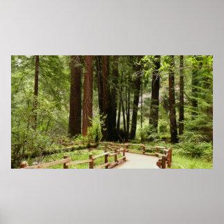Poster Chemin I en bois de Muir