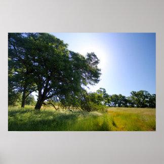 Poster Chêne dans le pré, ressort