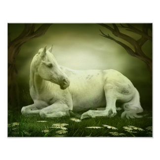 Poster Cheval Arabe gris