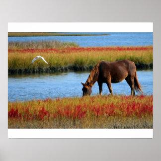 Poster cheval dans les marais
