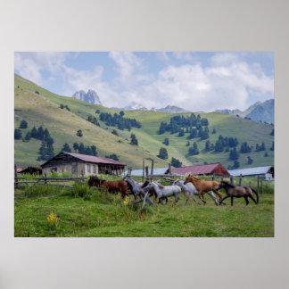 Poster Chevaux en montagnes de Tusheti