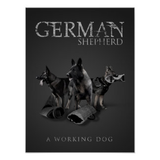 Poster Chien de berger allemand de travail - GSD
