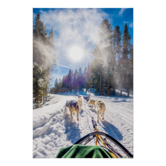 Poster Chien Sledding dans le Beaver Creek, Co