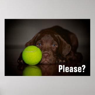 Poster Chiot de Labrador de chocolat avec de la balle de