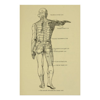 Poster Chiropractie de diagramme de système nerveux de