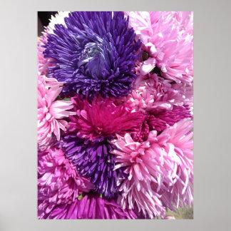 Poster Chrysanthèmes roses et pourpres