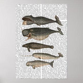 Poster Cinq baleines vintages