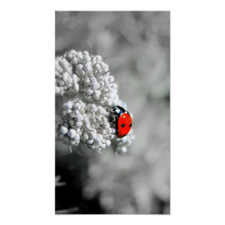 Poster Coccinelle - B&W