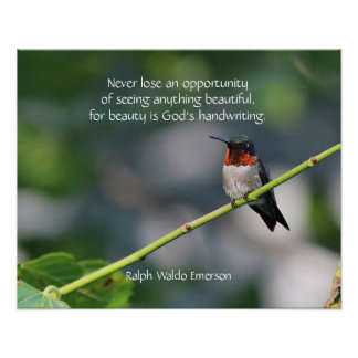 Poster colibri Rubis-throated