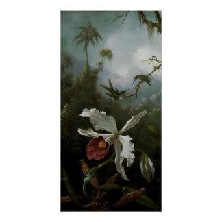 Poster Colibris et orchidée blanche par Martin J. Heade