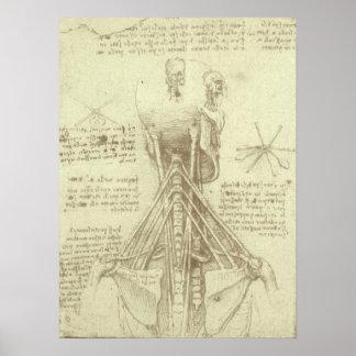 Poster Colonne vertébrale d'anatomie humaine par Leonardo