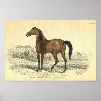 Poster Colt vintage d'impression de cheval de jument