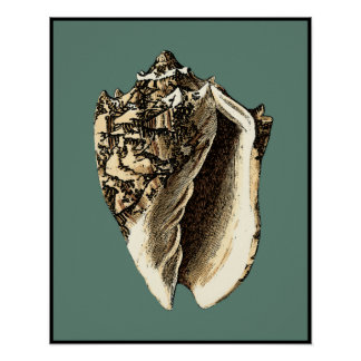 Poster Conque turquoise Shell
