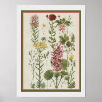 Poster Copie 1849 botanique par Jane Loudon 12x16