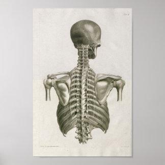 Poster Copie 1853 d'art d'anatomie d'épine de crâne de