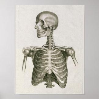 Poster Copie 1853 squelettique d'art d'anatomie de crâne