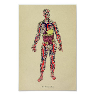 Poster Copie 1920 d'art d'anatomie d'organe de cru