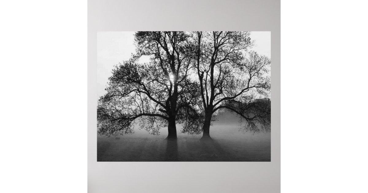 poster copie 2 grands arbres noir et blanc. Black Bedroom Furniture Sets. Home Design Ideas