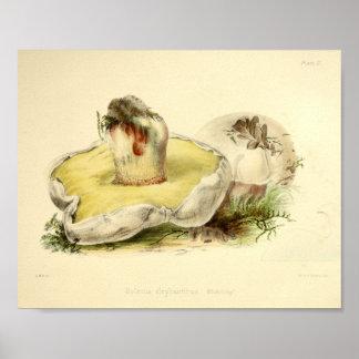 Poster Copie blanche d'art de casquette de champignons du