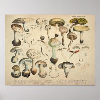 Poster Copie blanche de Brown de variété de champignon du