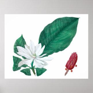 Poster Copie blanche de fleur de magnolia grande
