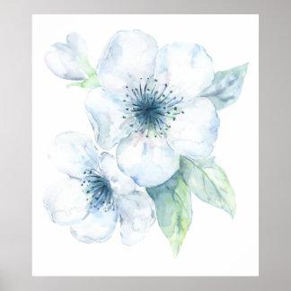 Poster Copie blanche de fleurs de cerisier d'aquarelle