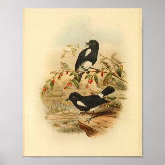 Poster Copie blanche noire du cru 1884 d'oiseau de