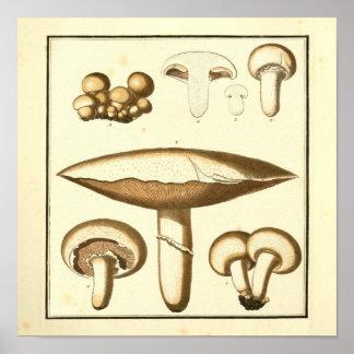 Poster Copie blanche vintage d'art de champignons de